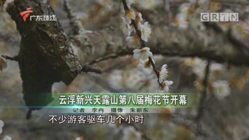 云浮新兴天露山第八届梅花节开幕