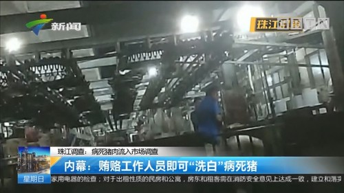 """珠江调查:病死猪肉流入市场调查 内幕:贿赂工作人员即可""""洗白""""病死猪"""