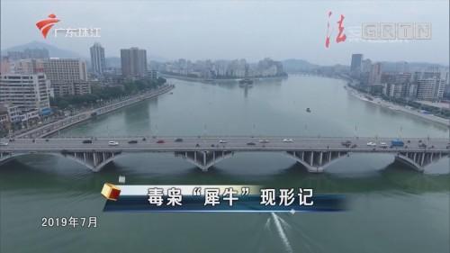 """[HD][2019-12-31]法案追踪:毒枭""""犀牛""""现形记"""