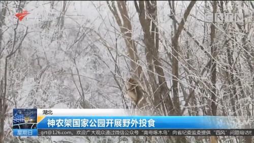 湖北:神农架国家公园开展野外投食