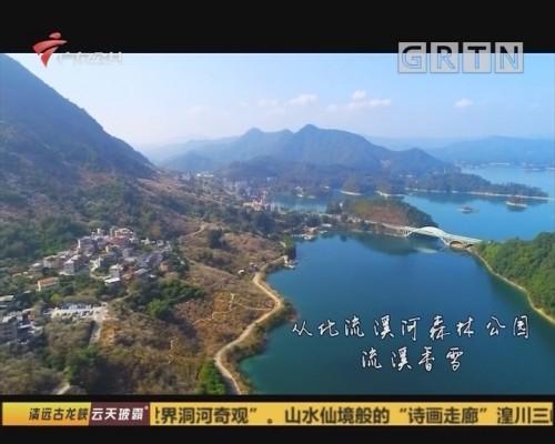(DV现场)心水之旅:从化流溪河森林公园 流溪香雪
