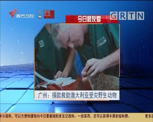 今日最友爱 广州:捐款救助澳大利亚受灾野生动物
