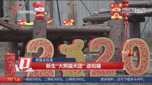 """熊猫送祝福:新生""""大熊猫天团""""送祝福"""