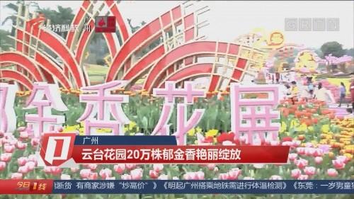 广州 云台花园20万株郁金香艳丽绽放