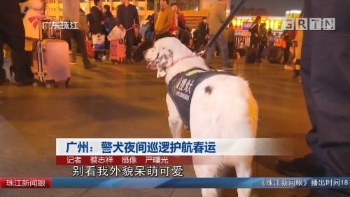 广州:警犬夜间巡逻护航春运