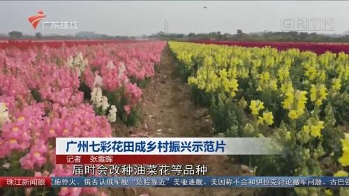 广州七彩花田成乡村振兴示范片