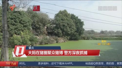 肇庆:大妈在猪圈聚众赌博 警方深夜抓捕