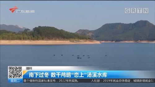 """潮州 南下过冬 数千鸬鹚""""恋上""""汤溪水库"""