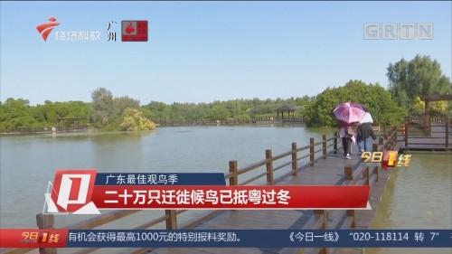 广东最佳观鸟季:二十万只迁徙候鸟已抵粤过冬