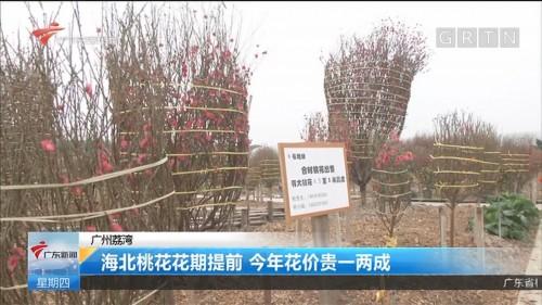 广州荔湾:海北桃花花期提前 今年花价贵一两成
