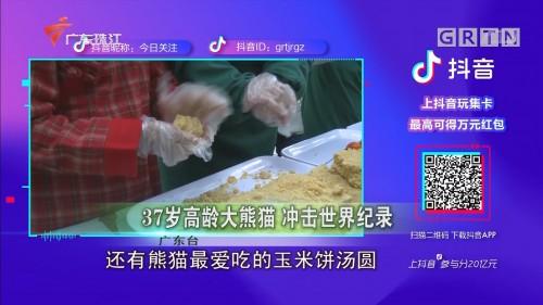 37岁高龄大熊猫 冲击世界纪录