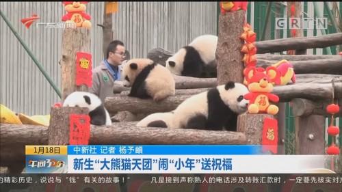 """中新社:新生""""大熊猫天团""""闹""""小年""""送祝福"""