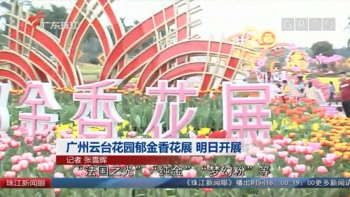 广州云台花园郁金香花展 明日开展