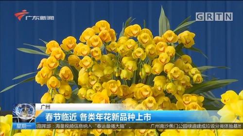 广州:春节临近 各类年花新品种上市