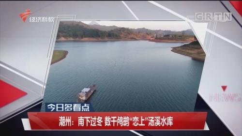 """潮州:南下过冬 数千鸬鹚""""恋上""""汤溪水库"""