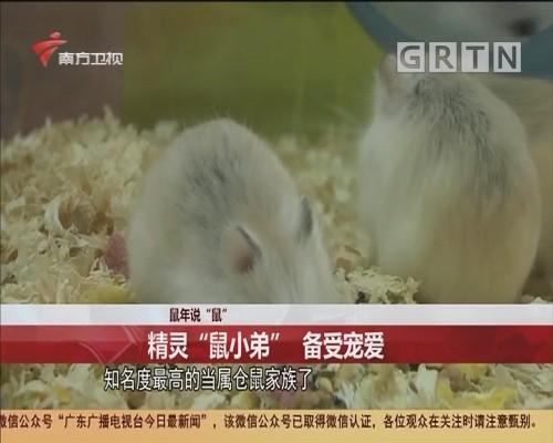 """鼠年说""""鼠"""":精灵""""鼠小弟"""" 备受宠爱"""