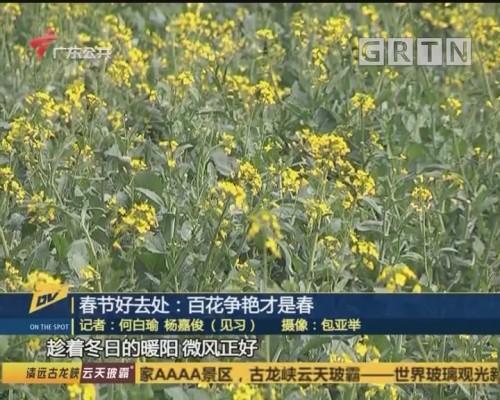 春节好去处:百花争艳才是春