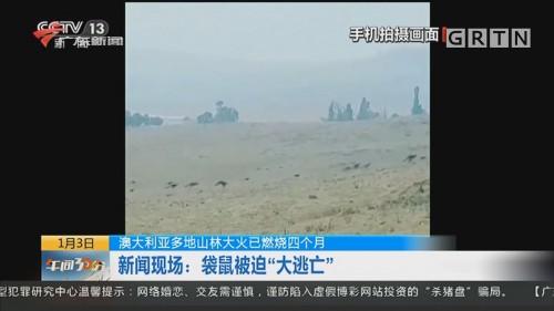 """澳大利亚多地山林大火已燃烧四个月 新闻现场:袋鼠被迫""""大逃亡"""""""