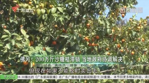 佛冈:200万斤沙糖桔滞销 当地政府协调解决