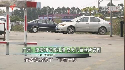 广州:流浪狗驾校扎堆 交犬只留验所管理