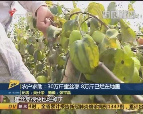 (DV现场)农户求助:30万斤蜜丝枣 8万斤已烂在地里