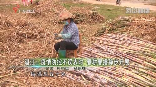湛江:疫情防控不误农时 春耕春播稳步开展