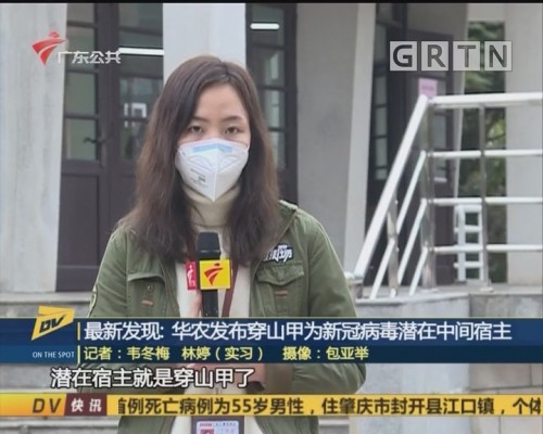 (DV现场)最新发现:华农发布穿山甲为新冠病毒潜在中间宿主