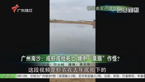 """广州南沙:成虾成批死亡 塘中""""泉眼""""作怪?"""