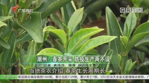 潮州:春茶开采 防疫生产两不误