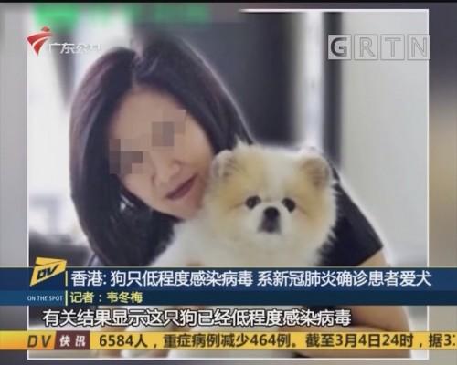 (DV现场)香港:狗只低程度感染病毒 系新冠肺炎确诊患者爱犬