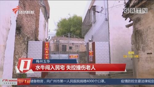 梅州五华 水牛闯入民宅 失控撞伤老人