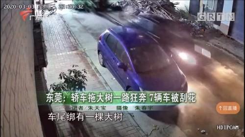 东莞:轿车拖大树一路狂奔 7辆车被刮花