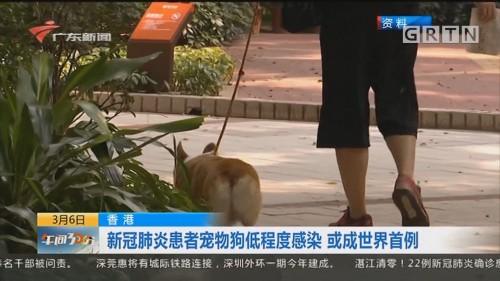 香港:新冠肺炎患者宠物狗低程度感染 或成世界首例