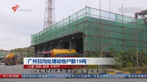 广州日均处理动物尸骸19吨