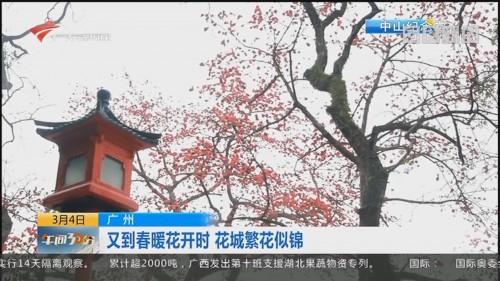 广州:又到春暖花开时 花城繁花似锦