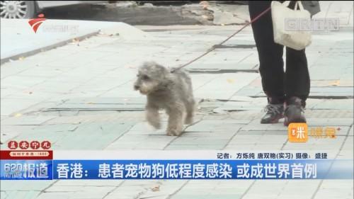 香港:患者宠物狗低程度感染 或成世界首例