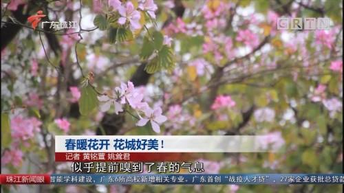 春暖花开 花城好美!