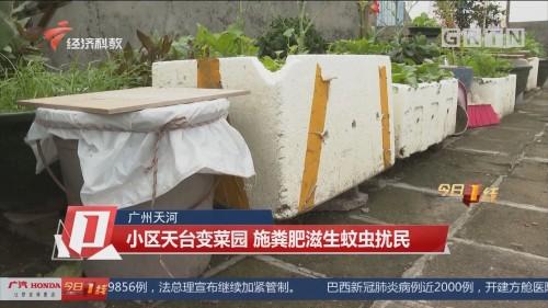 广州天河:小区天台变菜园 施粪肥滋生蚊虫扰民