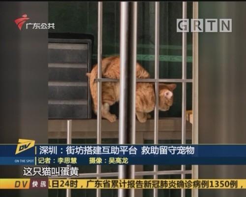 深圳:街坊搭建互助平台 救助留守宠物