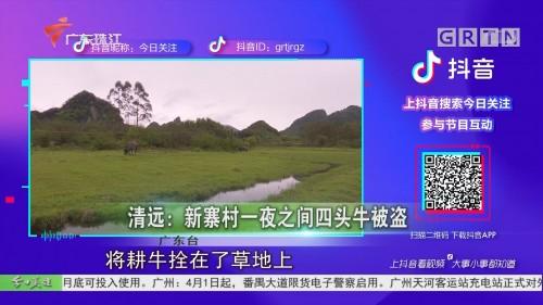 清远:新寨村一夜之间四头牛被盗