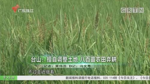 臺山:擅自調整土地 八百畝農田棄耕