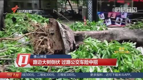 佛山禅城:路边大树倒伏 过路公交车险中招