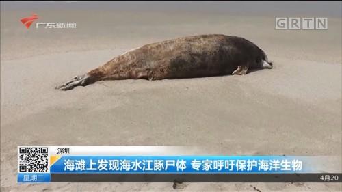 深圳 海滩上发现海水江豚尸体 专家呼吁保护海洋生物