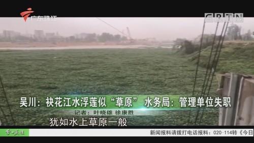 """吴川:袂花江水浮莲似""""草原"""" 水务局:管理单位失职"""