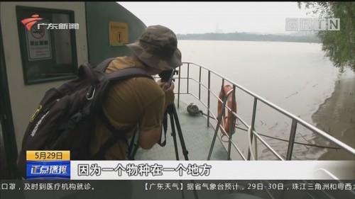 广东 大力保护红树林 生态修复成效显著