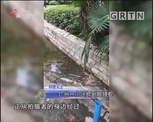广州一小区抓到眼镜蛇