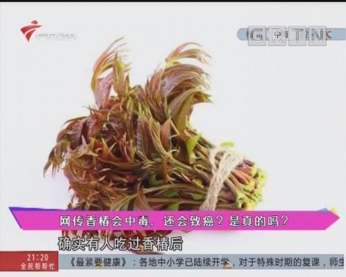 健康有料:網傳香椿會中毒,還會致癌?是真的嗎?