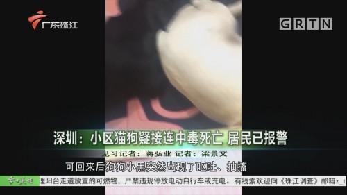 深圳:小區貓狗疑接連中毒死亡 居民已報警