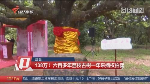 茂名 138万!六百多年荔枝古树一年采摘权拍卖