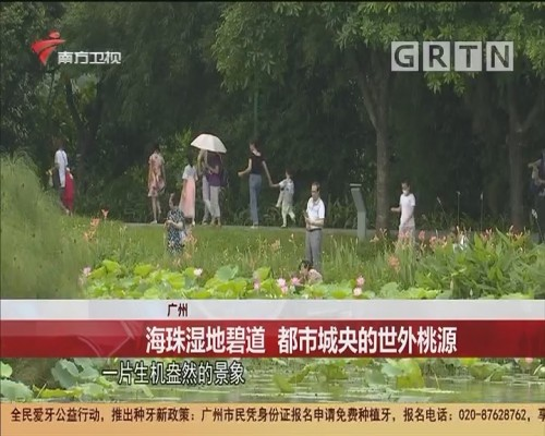 广州 海珠湿地碧道 都市城央的世外桃源